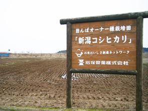 100406田んぼ
