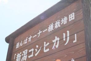 100515田んぼ