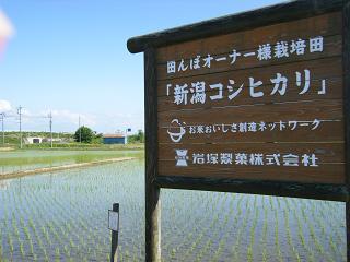 100531田んぼ